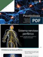 Sistema nervioso periférico .pdf