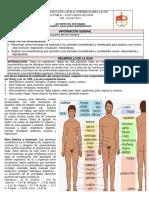 Guía Las Partes Del Ser Humano.