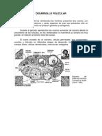 DESARROLLO FOLICULAR.pdf