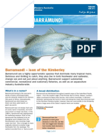 fact_sheet_barramundi.pdf