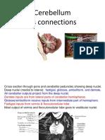 cerebellum connection