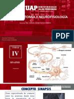 neurofisiologia 14