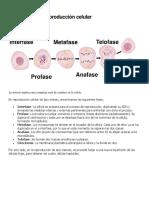 Fases de la reproducción celular.docx