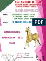 Morfofisiología de la Yegua