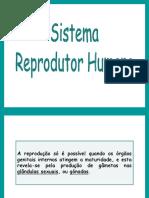 sistema-reprodutor