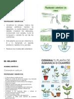 Afiches Institucionales - Cultivos Escolares - Cilantro - Cebollin - Ají Dulce - Pimenton