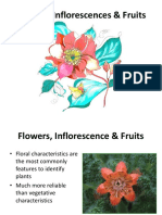 flowers-inflorescences-and-fruits1.ppt