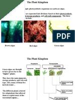The Plant Kingdom.ppt