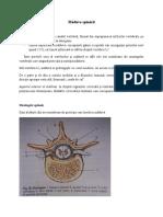 Măduva spinării