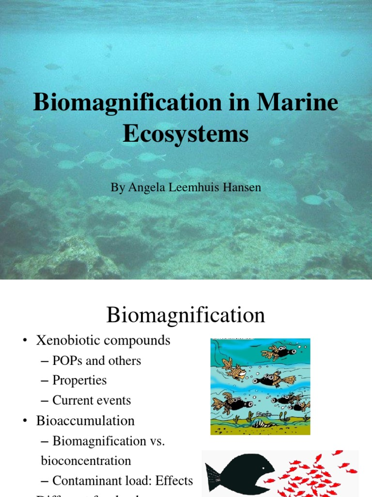 biomagnification in marine ecosystems food web polychlorinated biphenyl