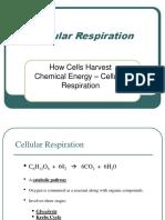 4_Cellular Respiration