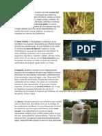 especies chilenas en peligro de extincion