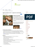 Agaricus blazei murill - ciuperca lui dumnezeu - Biaplant