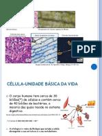 ppt-celula