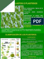 3. CLOROPLASTOS Y MITOCONDRIAS QUIMICA 2019-1