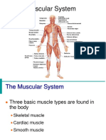 Muscular_System_10.ppt