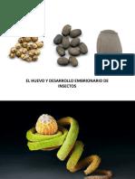 Huevo y desarrollo embrionario de los insectos