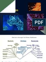 geneticabacterian