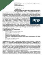 Importancia de las Hortalizas.docx
