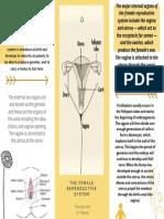 Female reproductive brochure