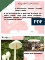 cogumelos toxicos