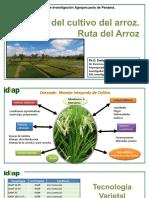 Ruta-del-arroz-Evelyn (1).pptx
