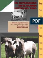 ULTRASONIDO TOROS.ppt
