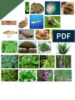 ANIMALES Y PLANTAS MEDICINALES.docx