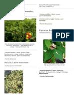 100 plantas ornamentales.docx