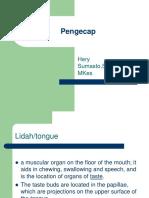 anatomi pengecap