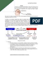 Fiebre, caracteristicas y fisiopatologia (Harrison)