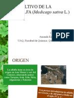 El Cultivo de La Alfalfa (Medicago Sativa l.)