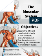 Muscular_System.pptx