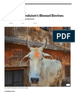 Holy Cows_ Hinduism's Blessed Bovines