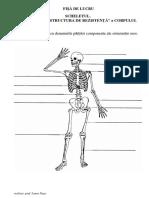 scheletul (1)