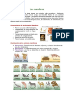 Los mamíferos2