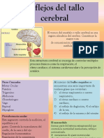 Reflejos del tallo cerebral.pptx