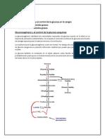 Gluconeogénesis-y-el-control-de-la-glucosa de betzabeth.docx