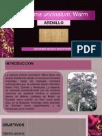 ARENILLO