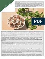 Os Benefícios da Semente de Moringa para a Saúde