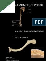 OSTEOLOGIA MIEMBRO SUPERIOR