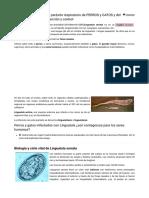 LINGUATULA SERRATA, parásito respiratorio de PERROS y GATOS y del GANADO. biología, prevención y control