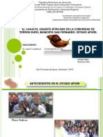 caracol africano.ppt
