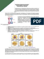 prueba piloto mitosis meiosis 2018-2 docx.docx