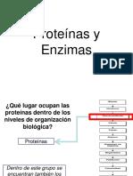 IV°Año Medio. Plan Diferenciado. 2017. Proteínas y Enzimas.ppt