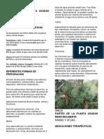 PLANTAS MEDICINALES HOJAS