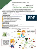 GUÍA SOBRE LAS PLANTAS 2019
