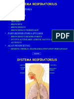 (6) sistem respirasi
