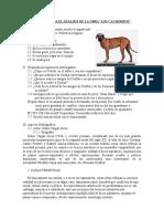 CACHORROS ANALISIS.doc