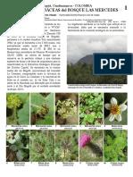 Herbaceas COLOMBIA LA MERCED.pdf